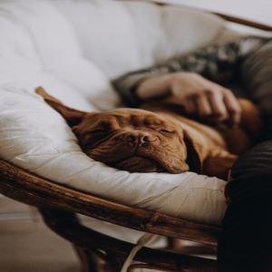 dog sleeping.jpg